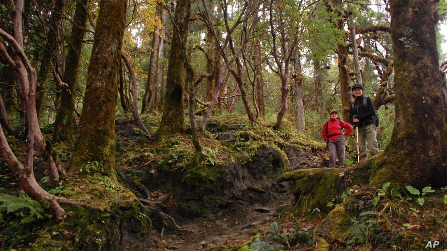 FILE - Trekkers hike through a densely forested area near Ghorepani, Nepal, Oct. 23, 2014.