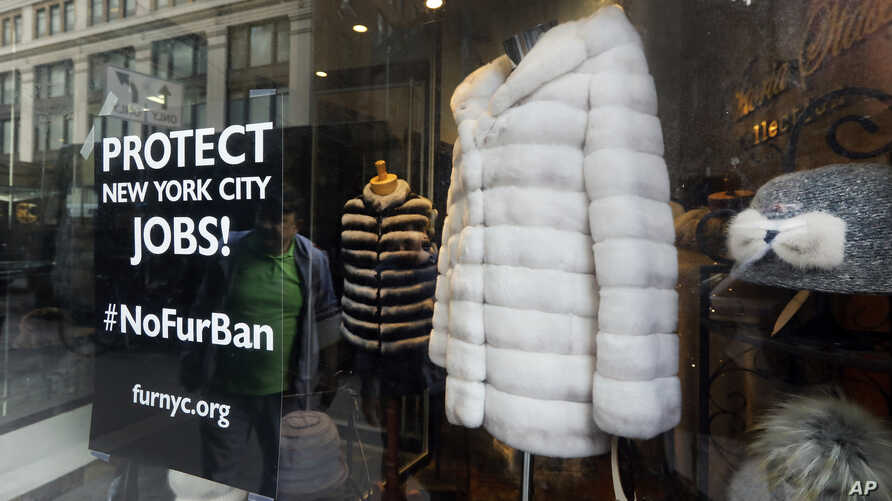 A sign by furnyc.org in the window of Victoria Stass Collection in New York's fur district, April 10, 2019. The fur trade is considered so important to New York's development that two beavers adorn the city's official seal, a reference to early D...