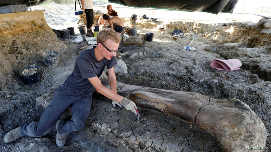 A man inspects the femur of a Sauropod after it was discovered earlier in the week during excavations at the palaeontological site of Angeac-Charente, France, July 25, 2019.
