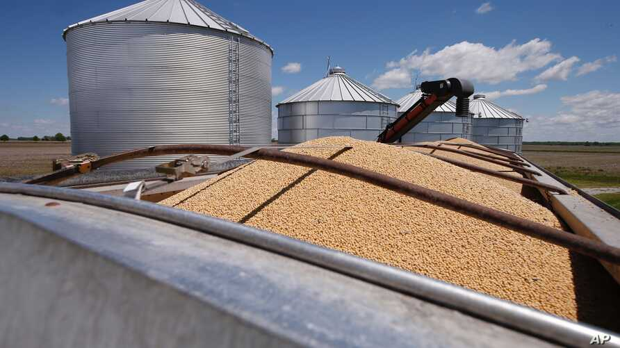 FILE - Soybeans awaiting transport sit in a truck-bed in Delaware, Ohio, May 14, 2019.