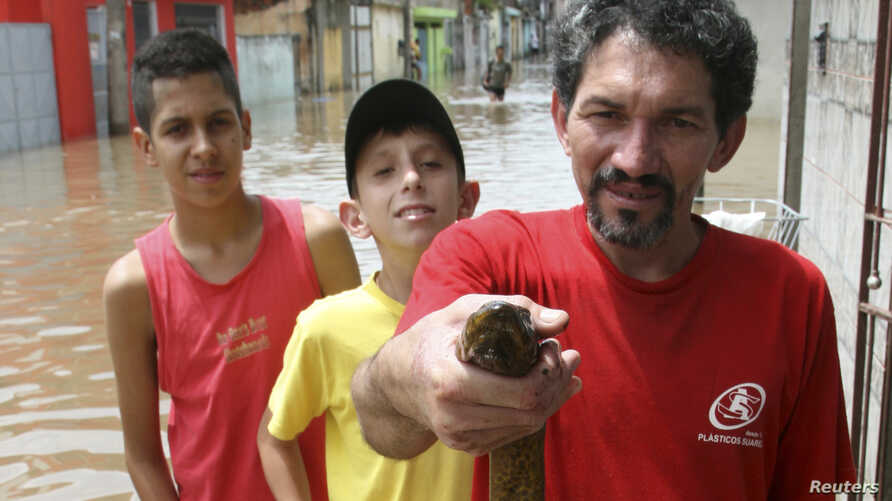 A man holds an electric eel which he found in front of his flooded house in Sao Paulo.