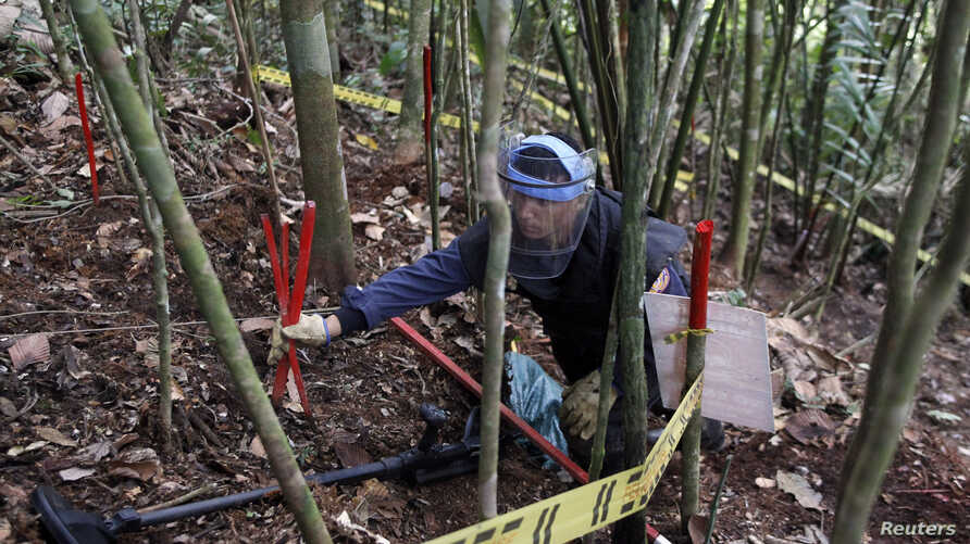A member of the Humanitarian Demining Battalion of the Columbian Army searches for landmines in Cocorna, Antioquia March 3,…