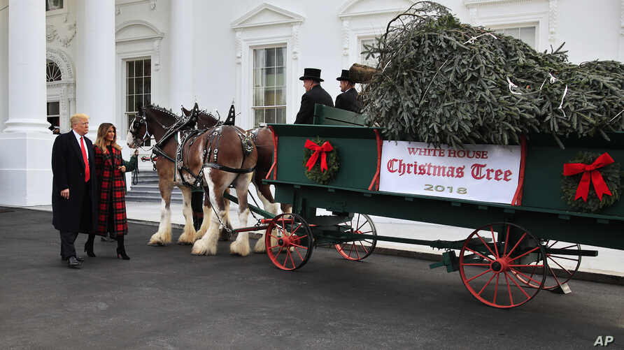FILE - President Donald Trump and first lady Melania Trump receive last year's White House Christmas Tree, at the North Portico of the White House, in Washington, Nov. 19, 2018.