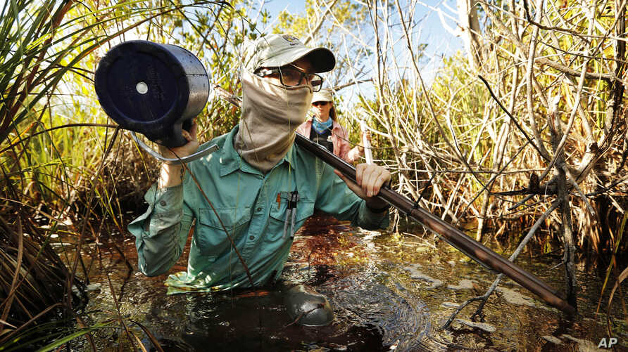 In this Wednesday, Oct. 30, 2019 photo, Austin Pezoldt carries gear through mucky water while assisting in a study of peat…