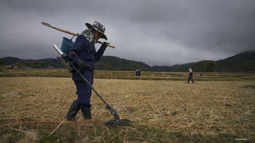 Technicians sweep a paddy field for UXO in Xiangkhouang Province, Laos, December 2014. (Sean Sutton/MAG)