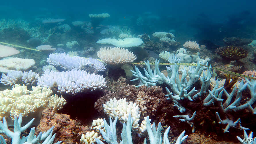 FILE - An undated handout photo received from ARC Centre of Excellence for Coral Reef Studies, April 19, 2018, shows a mass bleaching event of coral on Australia's Great Barrier Reef. (Mia Hoogenboom)