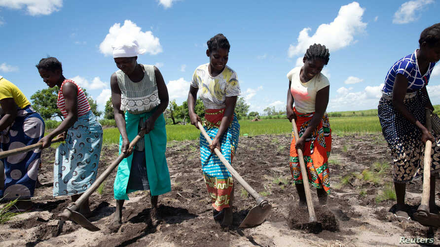 Women prepare land for crops as part of a World Food Program initiative helping communities recovering from the aftermath of last year's Cyclone Idai  in Dondo, Mozambique, Feb. 27, 2020.