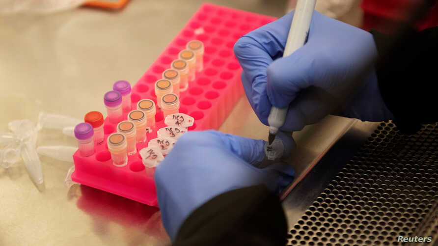 FILE - A researchers works with coronavirus samples as a trial begins on whether the anti-malaria drug hydroxychloroquine can prevent or reduce the severity of COVID-19, at the University of Minnesota in Minneapolis, Minnesota, March 19, 2020.