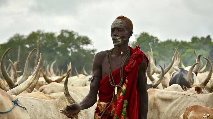 In this photo taken Monday, July 31, 2017, a young South Sudanese man tends to his herd of cattle at a camp outside the town of…