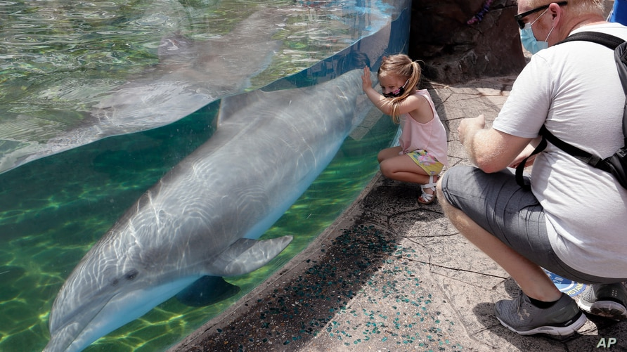 FILE - Guests watch a dolphin swims in a transparent pool at SeaWorld.