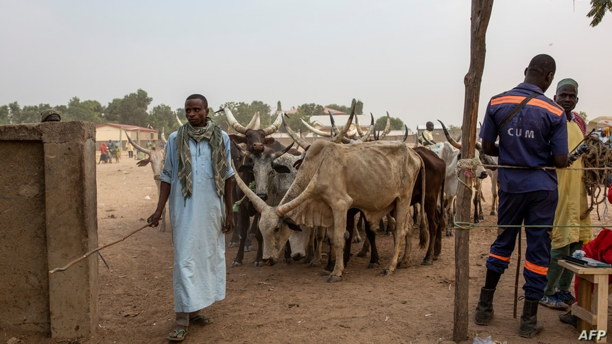 FILE - A man is seen with his herd at a cattle market in Maroua, Cameroo, March 2, 2020.
