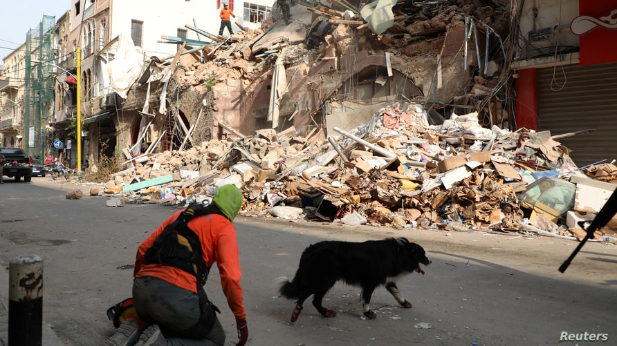 A rescue dog walks near rubble of damaged buildings due to the massive explosion at Beirut's port area, Lebanon September 3,…