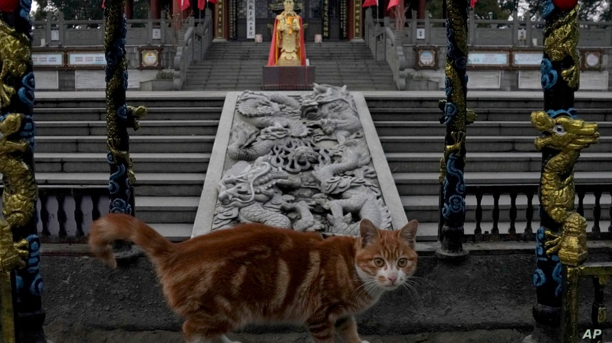 A cat pauses to look at visitors to a temple in Wuhan in central China's Hubei province on Feb. 9, 2021. A joint WHO-China…