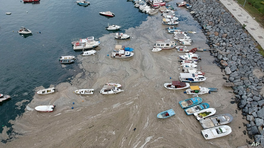 An aerial photo of Pendik port in Asian side of Istanbul, June 4, 2021, with a huge mass of marine mucilage, a thick, slimy substance made up of compounds released by marine organisms, in Turkey's Marmara Sea.