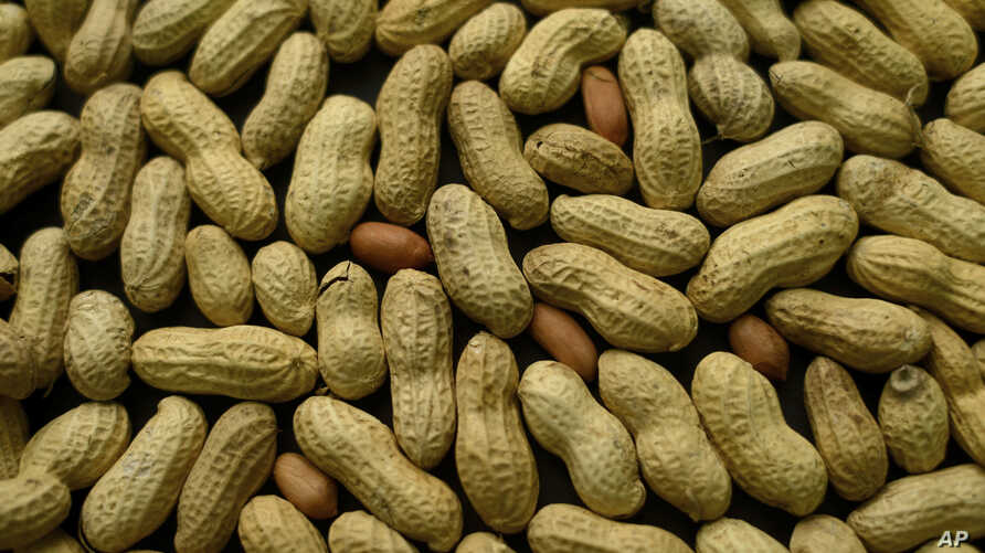 FILE - This Feb. 20, 2015 file photo, photo shows an arrangement of peanuts in New York. A study published Oct. 26, 2016, in the Journal of Allergy and Clinical Immunology says nearly half of those treated with a skin patch for peanut allergy…