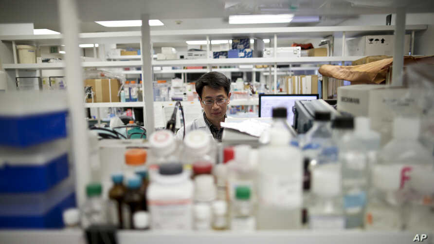 In this March 4, 2015 photo, research scientist Tony Huang works in a laboratory at Vertex Pharmaceuticals Inc. in San Diego…