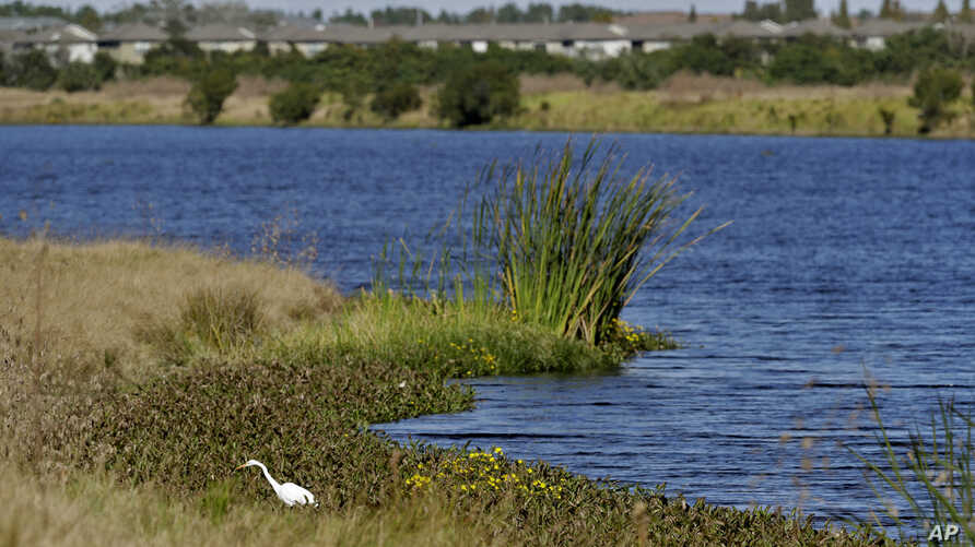 An Egret looks for food along Valhalla Pond Tuesday, Dec. 11, 2018, in Riverview, Fla. The Trump administration on Tuesday…