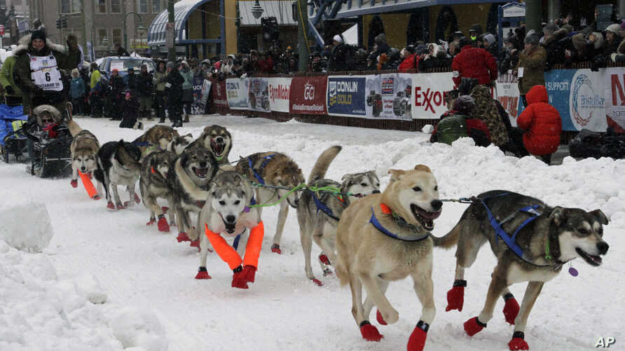 Fabio Berlusconi of Lomazzo, Italy, leaves the start line before the ceremonial start of the Iditarod Trail Sled Dog Race…