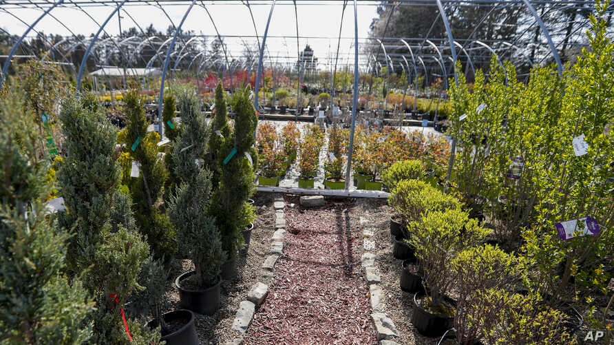 Potted trees and shrubs are for sale on the grounds of a nursery, Friday, April 24, 2020, in Cranberry Township, Pa. Some…