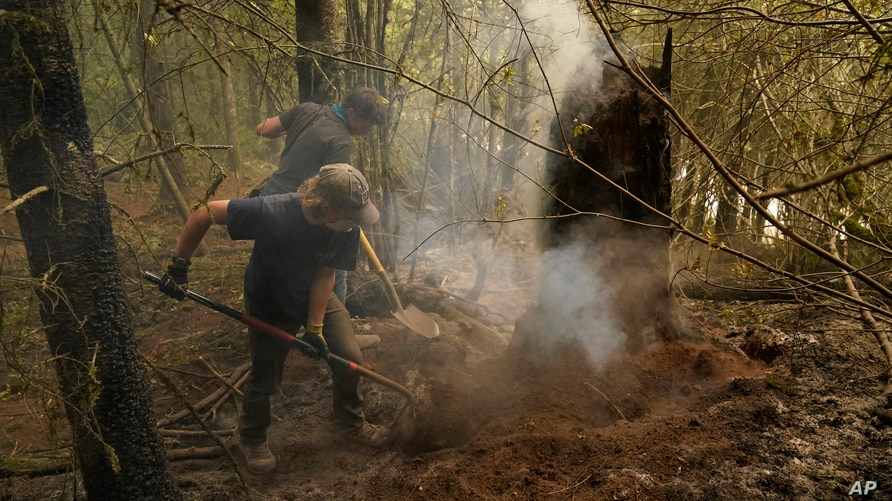 Wyatt Dunn, foreground, and James May help put out a smoldering stump at the Riverside Fire, Sunday, Sept. 13, 2020, near…