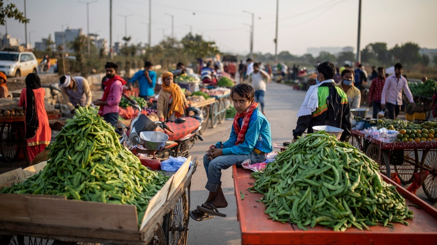 A young boy selling vegetables sits on a hand cart without wearing a mask on the outskirts of New Delhi, India, Friday, Nov. 20…
