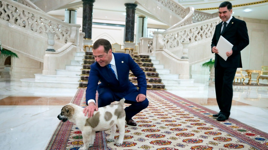 Russian Prime Minister Dmitry Medvedev pets an Alabai puppy presented to him by Turkmenistan's President Gurbanguly…