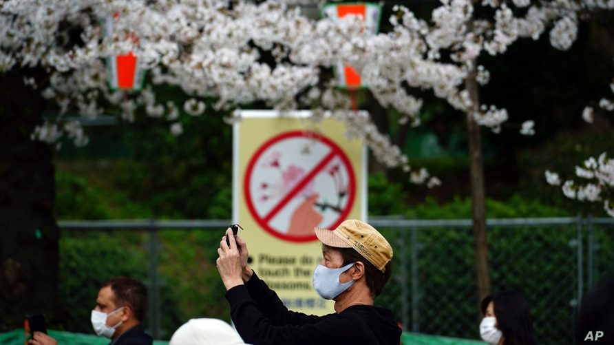 People wearing protective masks to help curb the spread of the coronavirus walk under cherry blossoms Friday, March 26, 2021,…