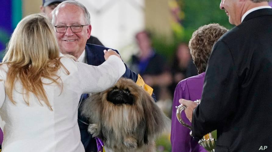 Competitors congratulate David Fitzpatrick, second from left, owner, breeder and handler of Wasabi, a Pekingese, who won Best…