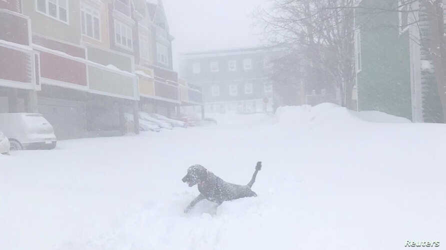 A dog is seen in a blizzard in St John's, Newfoundland and Labrador, Canada January 17, 2020 in this image obtained from social…