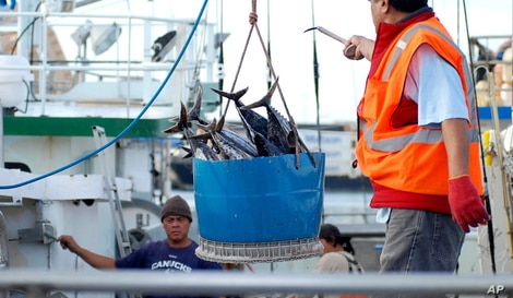 In this Thursday, Feb. 2, 2017 file photo, a catch of fish is unloaded from a commercial fishing boat at Pier 38 in Honolulu. A…