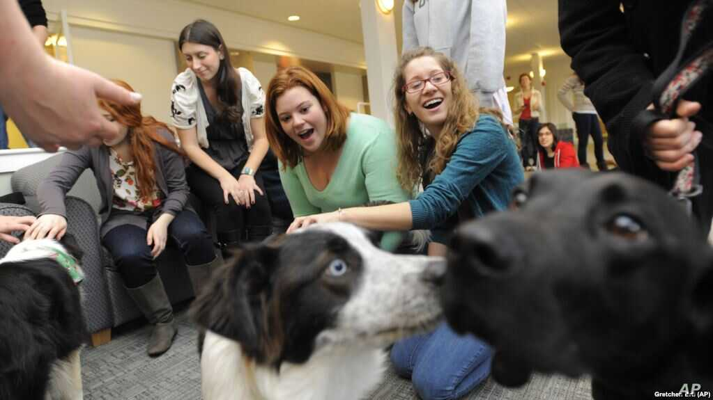 Colleges And Universities Say Yes To Pets Voice Of America English