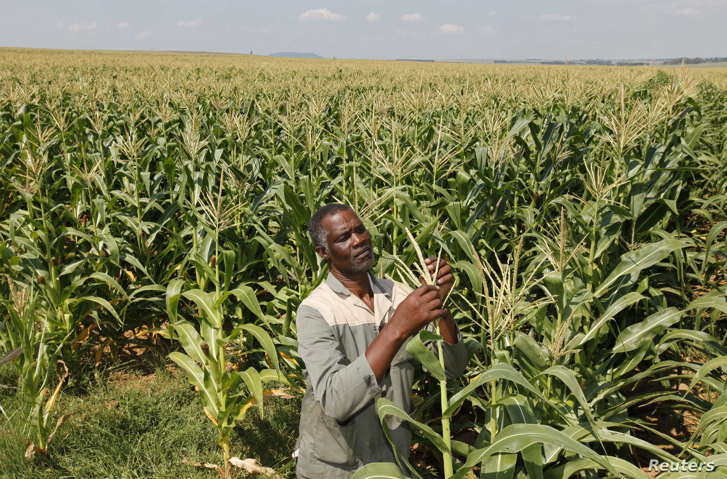 Black Farmers In South Africa Still Struggling With Land Reform Voice Of America English