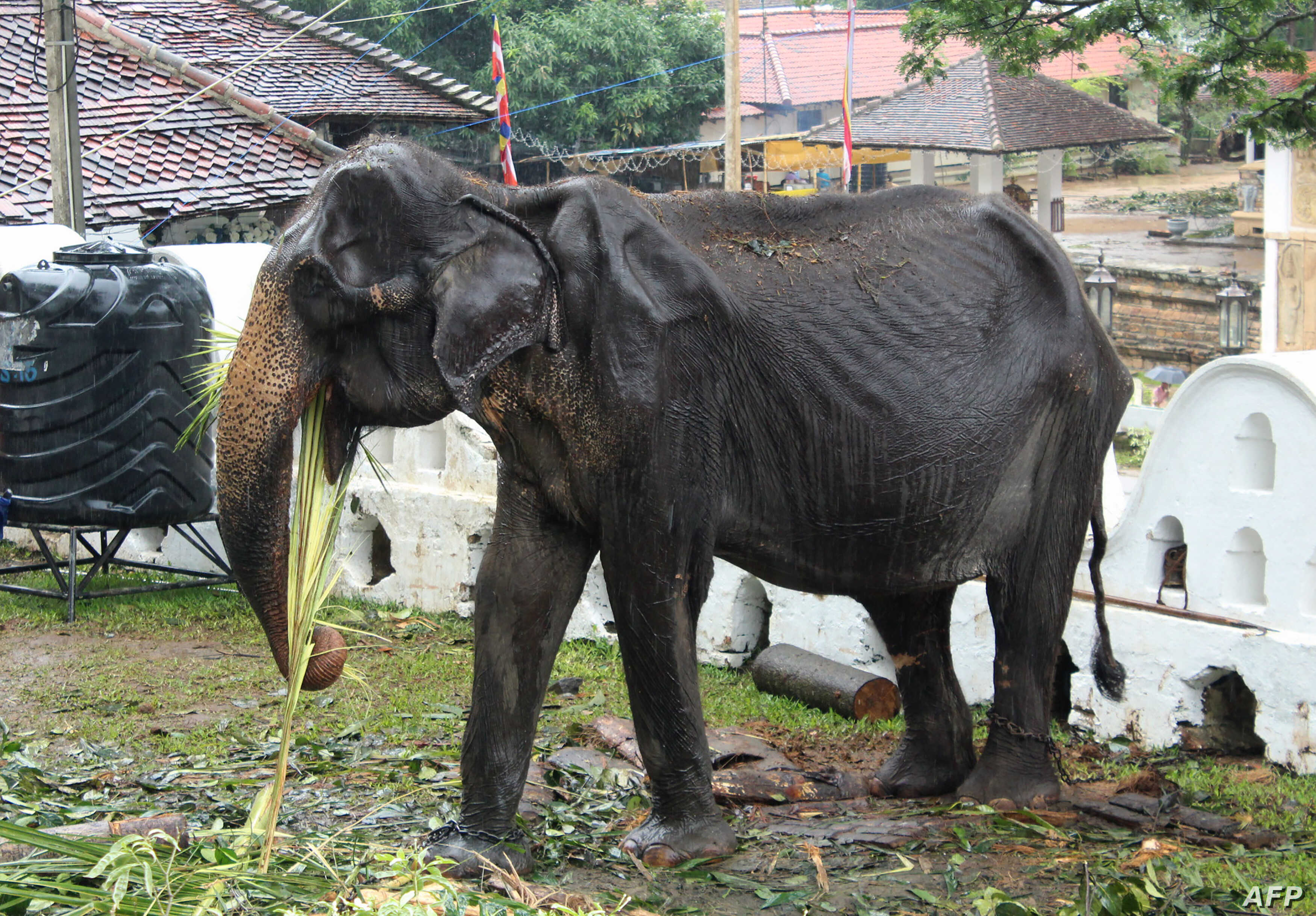 Un Bans Sending Baby Elephants From Wild To Zoos And Circuses Voice Of America English