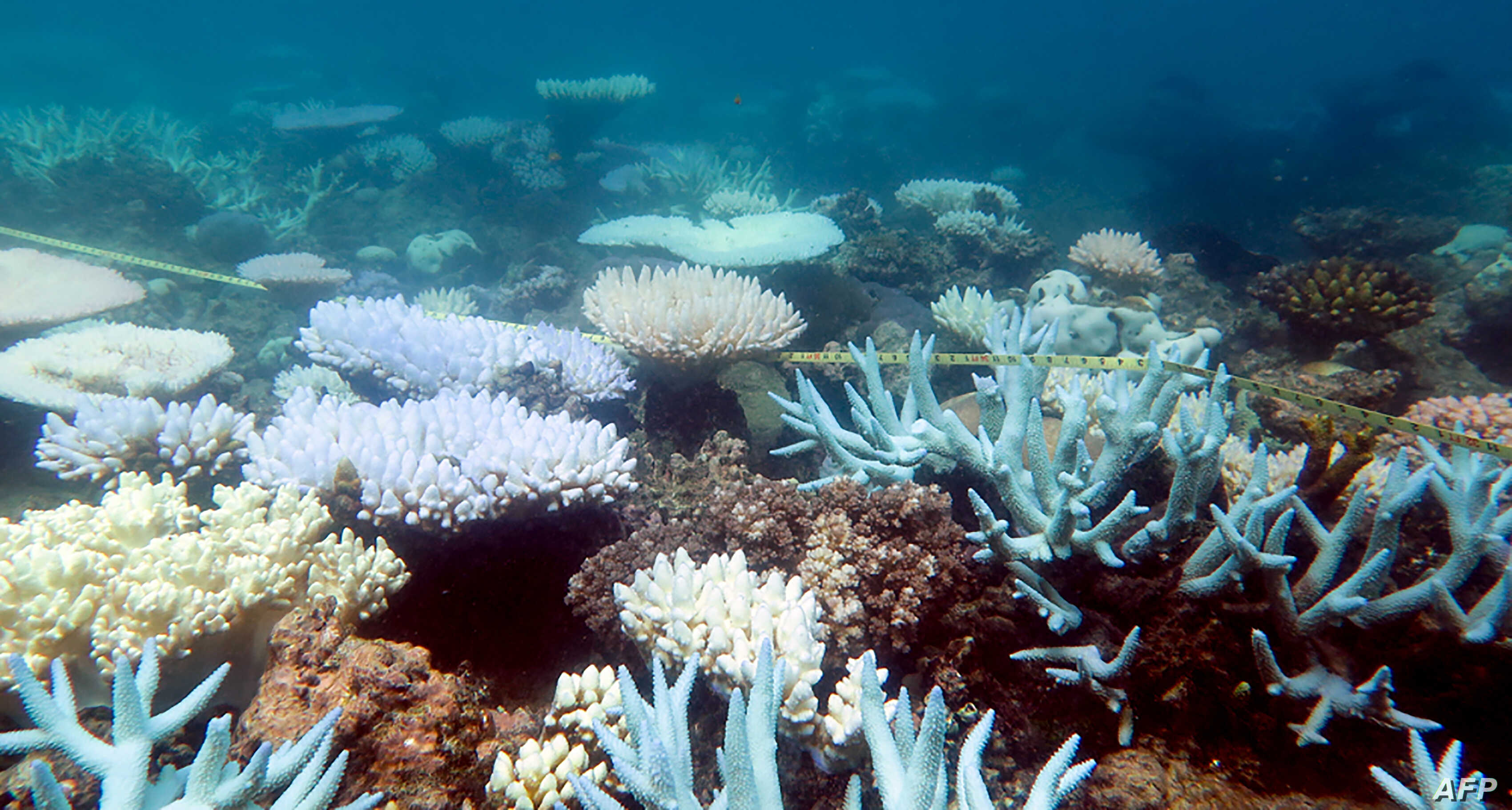 Great Barrier Reef might lose ability to recover from warming