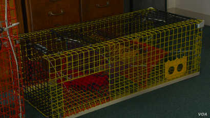 Riverdale Mills of Northbridge, Massachusetts, says its wire mesh products are used in most of the lobster traps in the United States and Europe, replacing traditional wooden devices.