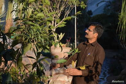 School teacher Nawaz Qureshi looks at an evergreen tree at a nursery in Islamabad, March 7, 2018.