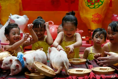 Girls play with teacup pigs, a rare pet in the country, at the start of celebrations leading to the Lunar New Year, Feb. 1, 2019, at Manila's Lucky Chinatown Plaza in Manila, Philippines. This year is the year of the pig on the Chinese lunar calendar...