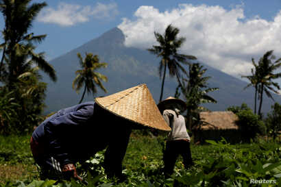 Mount Agung, a volcano for which the alert status was raised to its highest level last week, is seen as farmers tend their crops near Amed, on the island of Bali, Indonesia, Sept. 29, 2017.