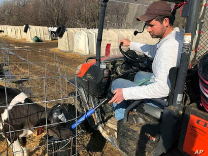 Ismael Castellanos feeds calves on a the dairy farm where he works, in Bethany, New York, March 20, 2019.