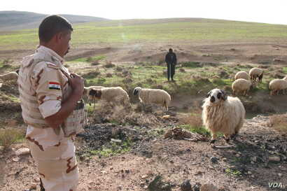 The fields surrounding Khafsa are littered with bombs and the bodies of militants killed more than a year and a half ago in Mosul, Iraq, Nov. 26, 2018.