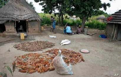 FILE - Farmers lay out sorghum, a wheat-like primary food source, for people living in Aweil, South Sudan.