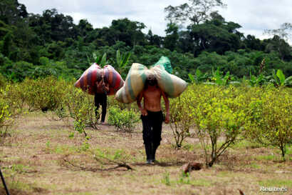 "Workers who collect coca leaves, known locally as ""raspachines,"" carry bags with harvested leaves to be processed into coca paste, on a coca farm in Guayabero, Guaviare province, Colombia, May 23, 2016."
