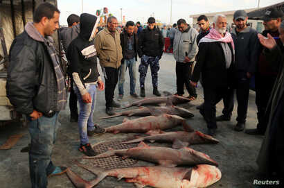 People look at fish put on sale at the seaport of Gaza City, after Israel expanded fishing zone for Palestinians, April 2, 2019.