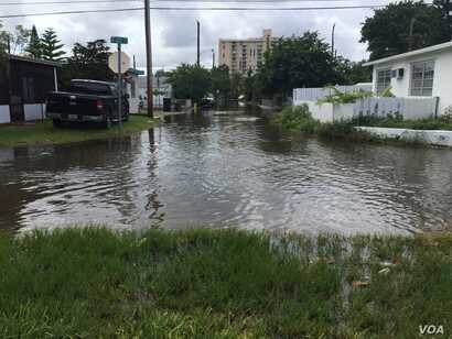 Tidal flooding in Highland Village, North Miami Beach. As tidal flood waters rise, among the things that city officials and scientists need to know is whether the water poses a health risk.