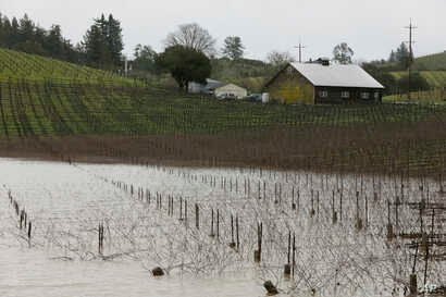 FILE - A vineyard is flooded along River Road near Forestville, Calif., Feb. 27, 2019.