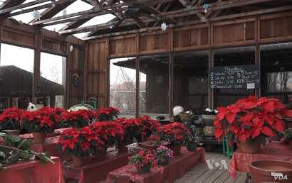 Krop's Crops also sells other holiday and season items, such as poinsettia plants.