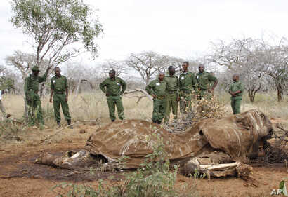 FILE - Kenyan Wildlife Rangers are seen standing near the carcass of an elephant in Tsavo East, Kenya, in this June 19, 2014, photo.