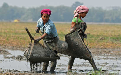 Women from the Tiwa tribe catch fish in a wetland at Dharamtul village in Nagaon district, in the northeastern state of Assam, India, February 19, 2017.