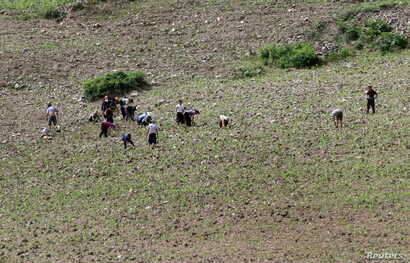 North Koreans farm in the field, along the Yalu River, in Sakchu county, North Phyongan Province, North Korea, June 20, 2015.