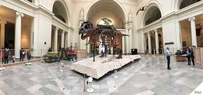 "Workers are preparing to move Sue to her new home in the museum's ""Evolving Planet"" exhibit in the second floor galleries at the Chicago Field Museum."